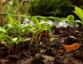 Initiatives Citoyennes en faveur de l'Environ...