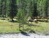 RENFORT : les interactions entre forêts et territo...