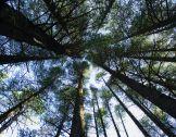 Flash thématique PEI avril 2019 : Forêt/bois