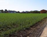 AMI - Installation agricole - Ris Orangis (91...