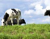 Encourager l'élevage durable en Europe : une ...