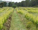 Entretien du sol en viticulture bio : un guid...