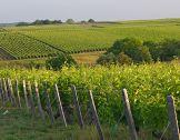 Climenvi : aider les viticulteurs à s'adapter...