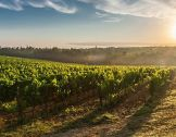 À la recherche de nouveaux itinéraires vitico...