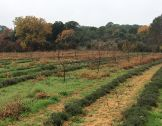 Développer l'agroforesterie occitane : l'ambi...