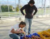 Le PEI en Normandie : un dispositif en plein essor
