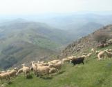Rencontres nationales des acteurs du pastoralisme