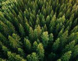 60 ans d'inventaire forestier pour éclairer l'aven...