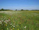La prise en compte de la biodiversité dans les str...