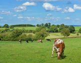 Atelier en ligne «Vers une agriculture neutre...