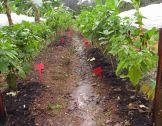 Préserver la fertilité des sols
